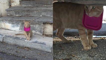 Τάπερ σφήνωσε σε κεφάλι γάτου στη Φιλοθέη!