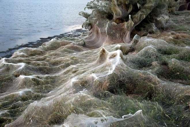 Ιστός αράχνης σκέπασε 300 μέτρα βλάστησης στο Αιτωλικό! - ΦΩΤΟ