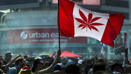 Στον Καναδά ζητούν ερασιτέχνες για να δοκιμάζουν κάνναβη!