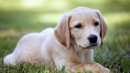 Έχετε σκύλο; Να το μεγάλο καλό που κάνει στην καρδιά σας