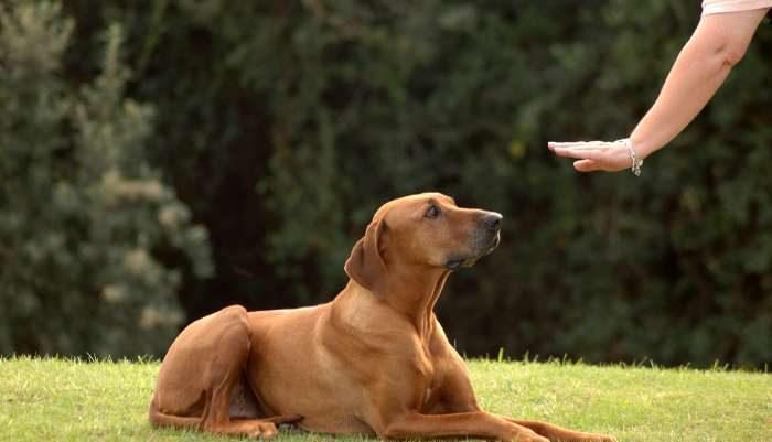 Οι βασικοί κανόνες εκπαίδευσης των σκύλων