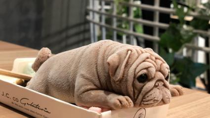 Ανατριχιαστικό: Αυτά τα χαριτωμένα σκυλάκια είναι παγωτά (ΒΙΝΤΕΟ)