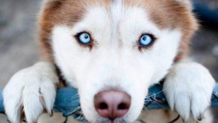 Τι σημαίνουν τα πράγματα που κάνει ο σκύλος