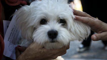 Οι σκύλοι έχουν συναισθήματα όμοια με των ανθρώπων