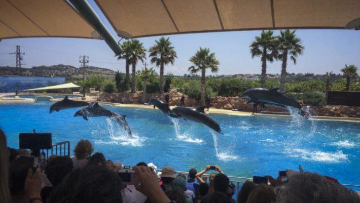 «Ντου» ακτιβιστών στο Αττικό ζωολογικό πάρκο! (ΒΙΝΤΕΟ)