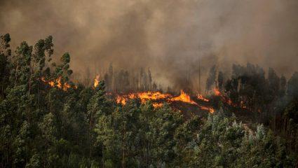 Τρίκαλα: Κάηκε ζωντανός στο περιβόλι του
