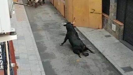 Εξοργιστικό βίντεο: Ταύρος σπάει τα δύο του πόδια και σέρνεται αβοήθητος σε φεστιβάλ στην Ισπανία