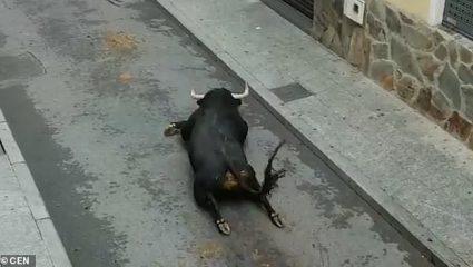 Eικόνα που σοκάρει: Ταύρος έσπασε τα πόδια του πηδώντας από φορτηγάκι σε ισπανικό φεστιβάλ (ΒΙΝΤΕΟ)
