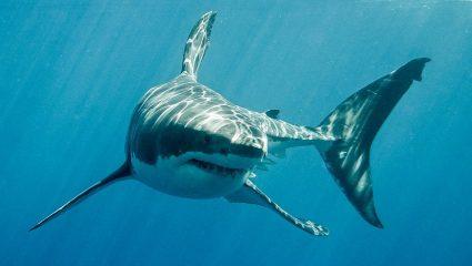 Γυναίκα σκόνταψε και έπεσε σε ενυδρείο με καρχαρίες (ΒΙΝΤΕΟ)