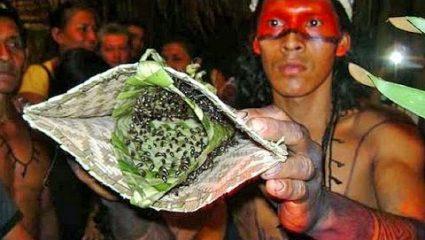 Το οδυνηρό έθιμο «ενηλικίωσης» των αγοριών στον Αμαζόνιο