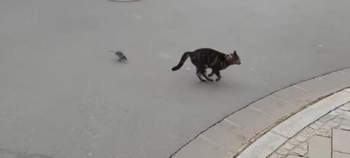Ξεκαρδιστικό βίντεο: οι ρόλοι αλλάζουν και το ποντίκι κυνηγάει τη γάτα