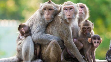 Ο ζωολογικός κήπος του Λένινγκραντ ζητάει αρχαιοελληνικό όνομα για μαϊμού
