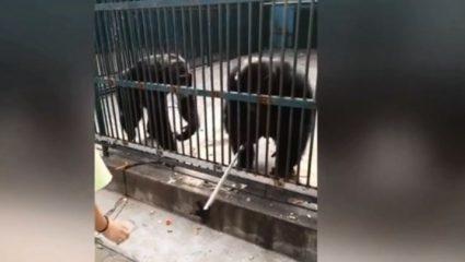 Χιμπατζής «κλέβει» selfie stick από τουρίστα! (ΒΙΝΤΕΟ)