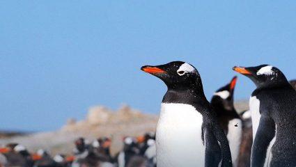 Πωλείται όπως είναι… επιπλωμένο: Νησί πωλείται με τους πιγκουίνους του!