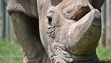 Αυτά τα άγρια ζώα εξαφανίστηκαν από τον πλανήτη το 2018