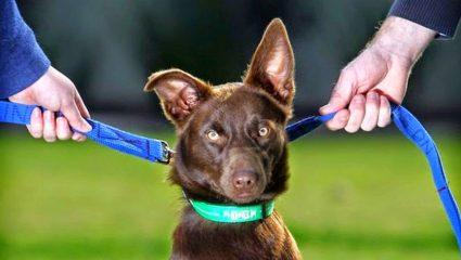 Ζευγάρι πήγε στα δικαστήρια για την επιμέλεια του σκύλου του!