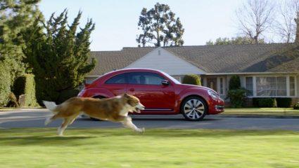 Γιατί τα σκυλιά κυνηγούν τα… αυτοκίνητα