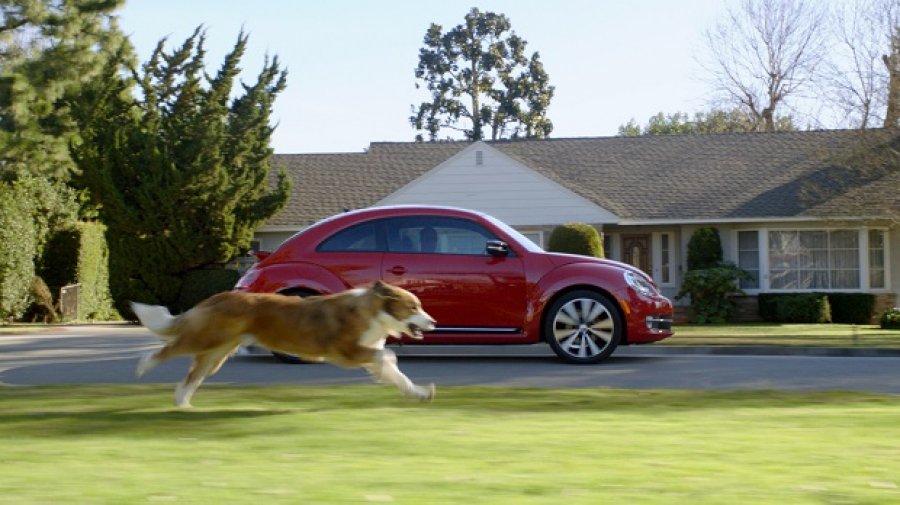 Γιατί τα σκυλιά κυνηγούν τα... αυτοκίνητα