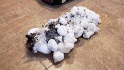 Πραγματικά εφτάψυχη: Ξεπάγωσαν κατεψυγμένη γάτα και είναι μια χαρά! – ΒΙΝΤΕΟ