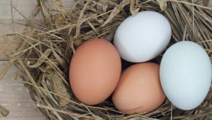 Ποια είναι η διαφορά μεταξύ καφέ και λευκών αβγών;