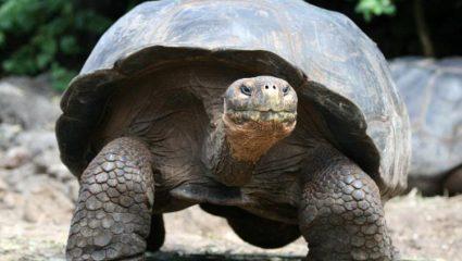 Εξαφανισμένο για 110 χρόνια είδος χελώνας εμφανίστηκε στα Γκαλαπάγκος