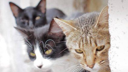 Απίστευτο: Γυναίκα εξοντώνει γάτες και δίνει συνταγές μέσω Facebook για φόλες!