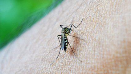 Κουνούπια και τσιμπούρια απειλούν την υγεία των Ευρωπαίων