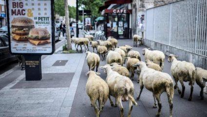 Έγραψαν σε σχολείο… 15 πρόβατα για να μην καταργηθούν τα τμήματα