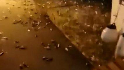 Ψάρια στην Πρέβεζα βγαίνουν στην στεριά για να σωθούν! (ΒΙΝΤΕΟ)