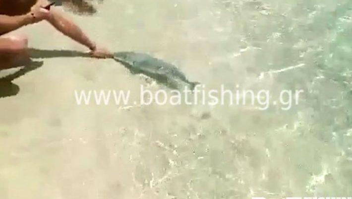 Λαγοκέφαλος δάγκωσε λουόμενο σε παραλία της Καρπάθου (ΒΙΝΤΕΟ)