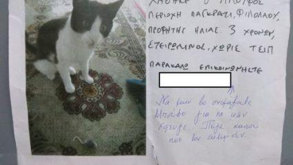 Το γατάκι «Μπούφος» που έγινε viral