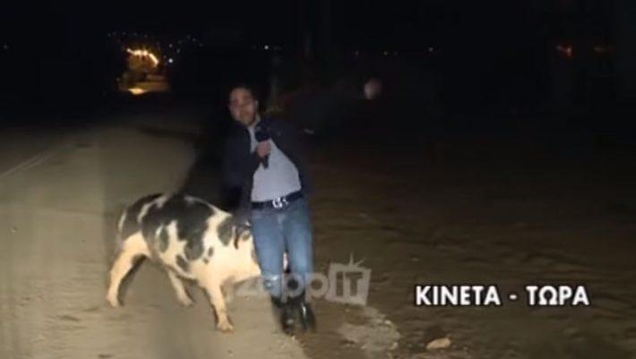Κλάμα: Γουρούνι κυνηγάει on air ρεπόρτερ του Παπαδάκη! - ΒΙΝΤΕΟ