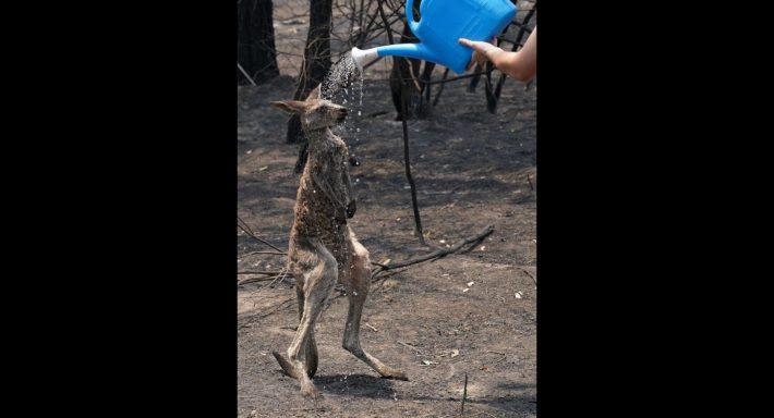 Ραγίζει καρδιές: Η φώτο με το διψασμένο καγκουρό στην Αυστραλία που έγινε viral