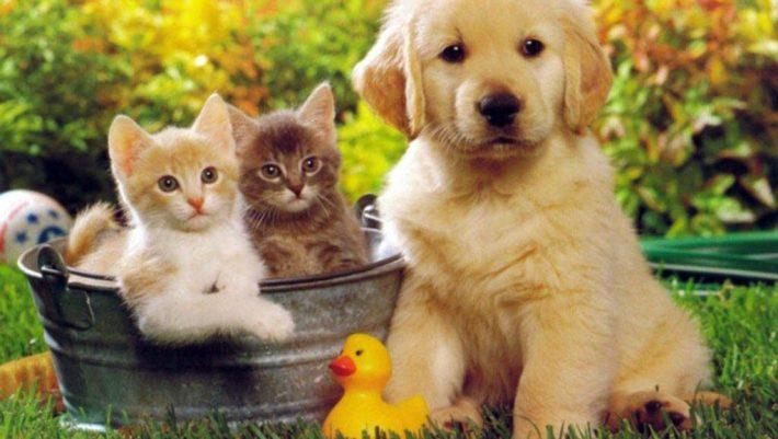 Πέρασε και στα ζώα: Γάτες και σκύλοι μολύνθηκαν από κορωνοϊό από τα αφεντικά τους