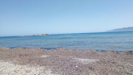 Απίστευτο κι όμως ελληνικό: Συνελήφθη επειδή… καθάριζε τα φύκια από παραλία