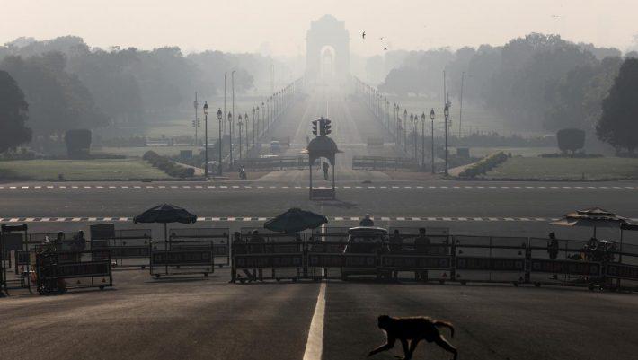 Σαν ταινία τρόμου: Μαϊμούδες στην Ινδία κλέβουν από εργαστήριο αίμα με κορωνοϊό