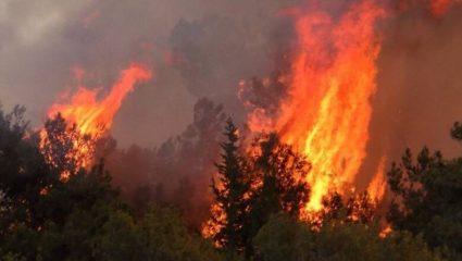 Καταστροφική φωτιά στην Κύπρο: Αυτή η φωτογραφία «πάγωσε» το ίντερνετ